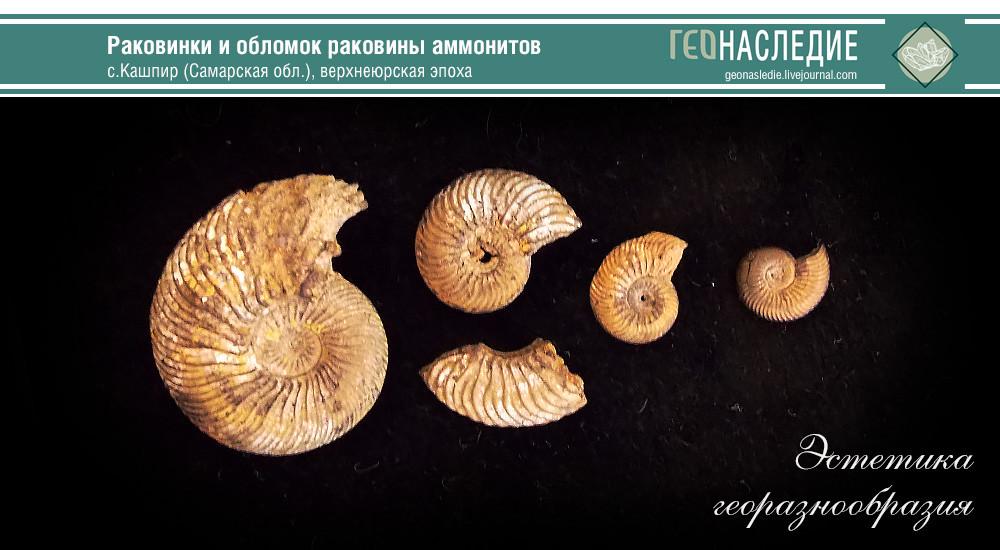 Кашпирские аммониты юрского периода