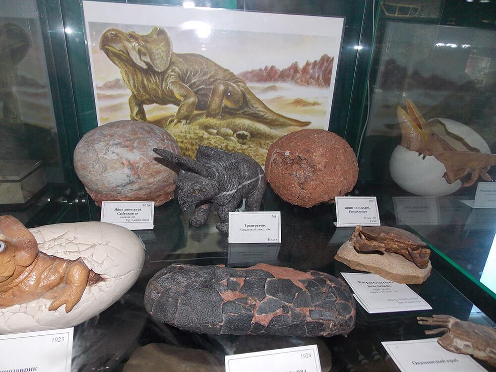 Окаменелые яйца верхнемеловых динозавров