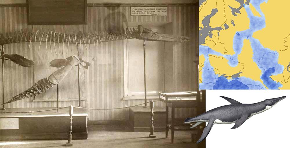 Скелет плиозавра Журавлева в Пугачевском музее