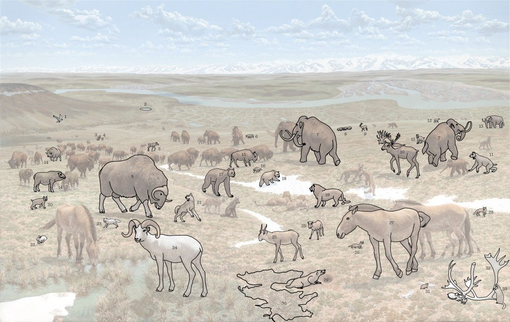 Мамонтовая фауна Аляски