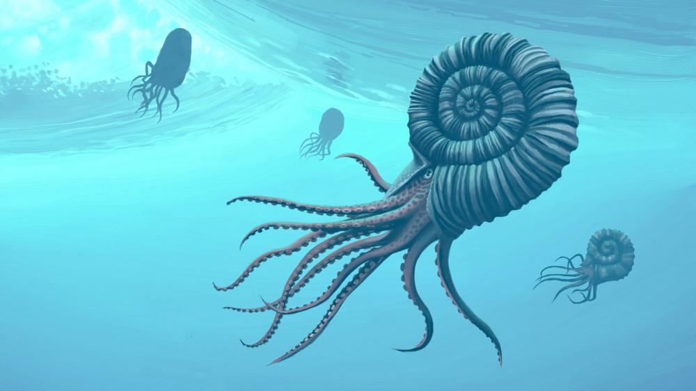 Реконструкция аммонитов в толще вод мезозойского моря