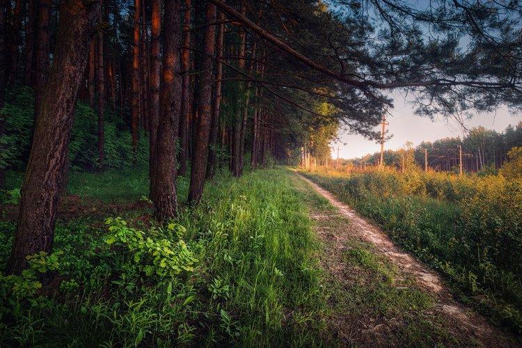 Россия Леса Nakhabino Moscow Oblast 1