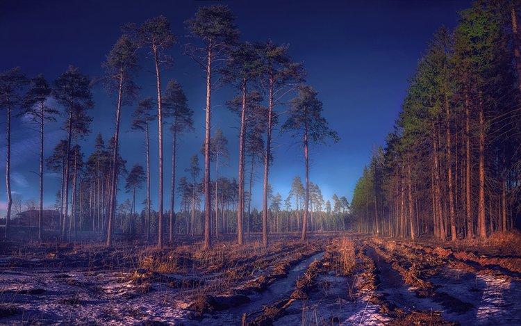 Россия Леса Nakhabino Moscow Oblast 2