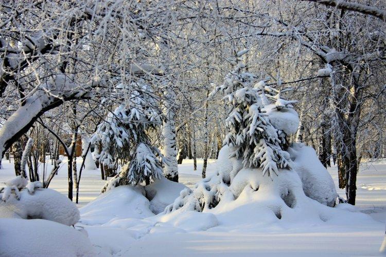 Россия Леса Зима Сибирь Деревья Ель