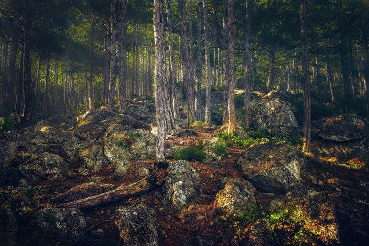 Россия Леса Крым Камни Alupka Ствол дерева