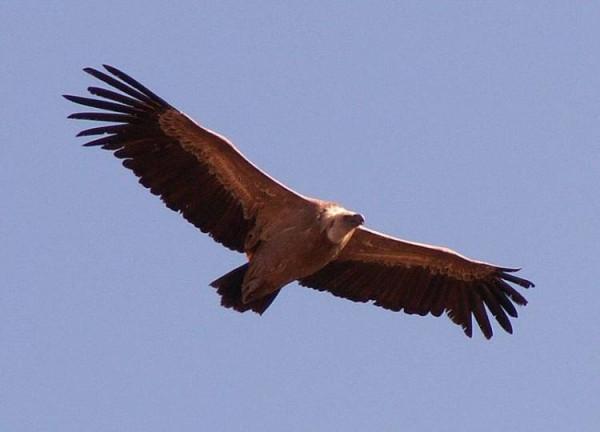 орел в бл.jpg