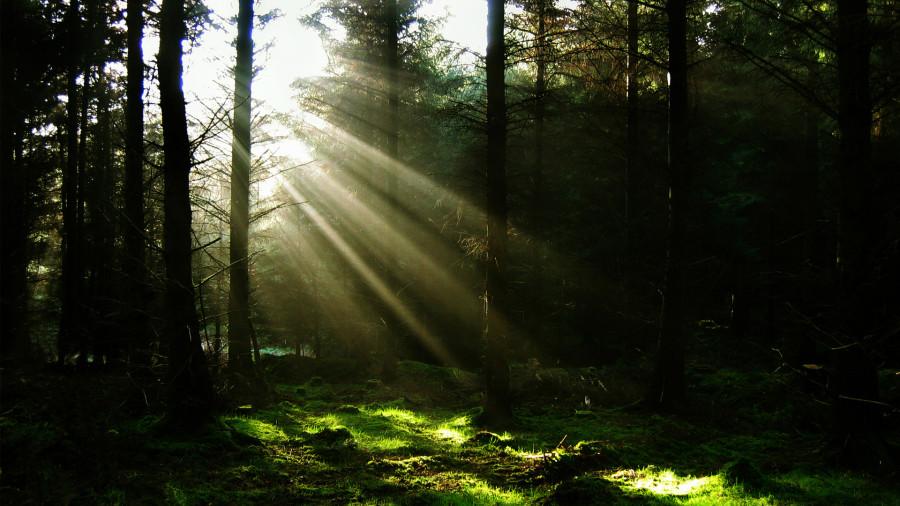 лес дремучий1.jpg