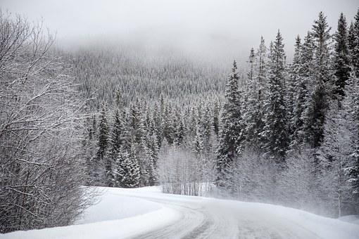 снег лес.jpg