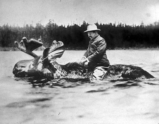 Теодор Рузвельт на лосе.