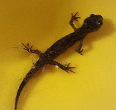 Sullivan_Salamander_2013-10-31 20.06.29