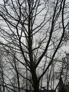 Under the Moon Tree...