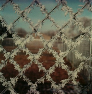 Hoarfrost on Fence, 1979