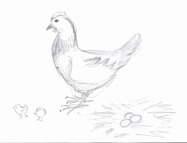 курица с цыплятами  012