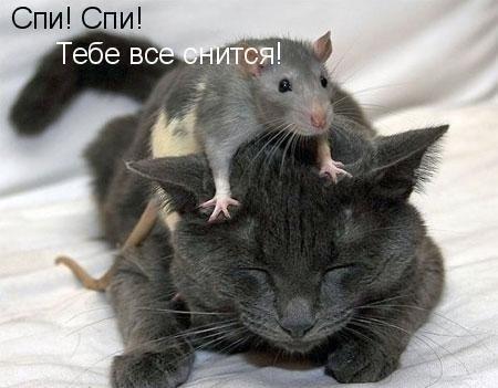 Крыса и кот