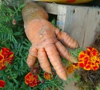 Морковь 1