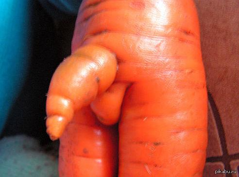 Морковь 7