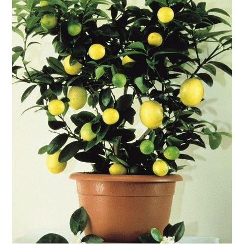 Досветка растений