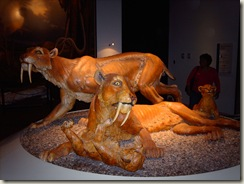Sabre tooth family; sculpture.