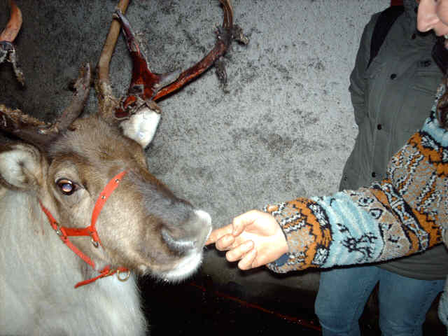 My sister feeding a reindeer with msinvisfem in the background (Sporran)