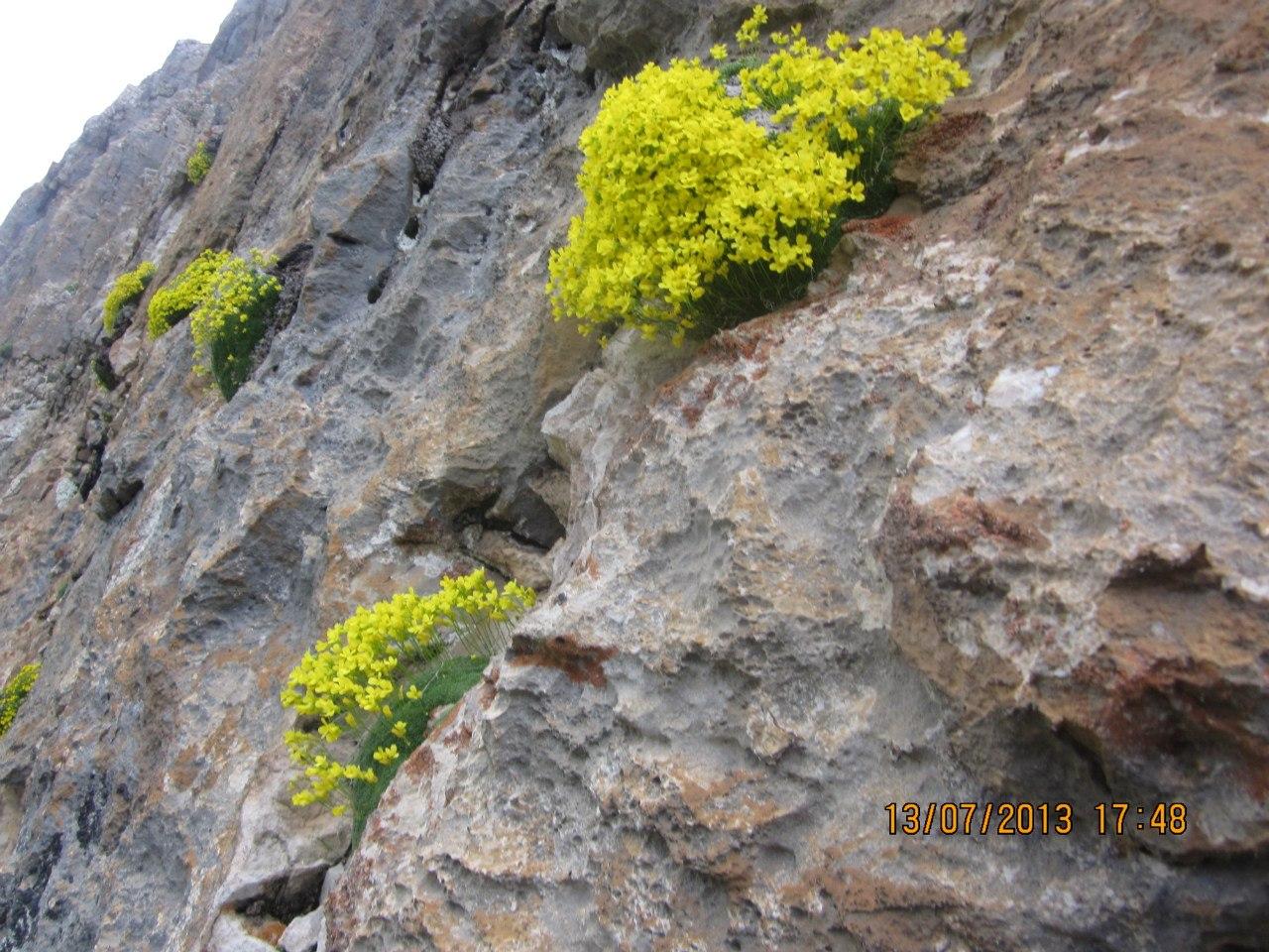 и на холодных скалах есть красота...