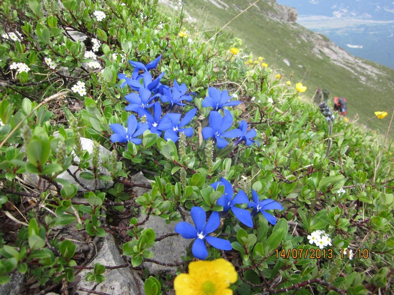 скромные, но яркие цветы...