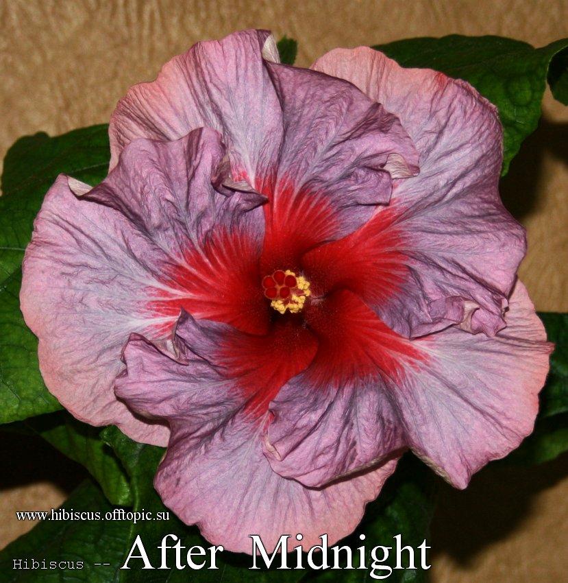 142 - After Midnight
