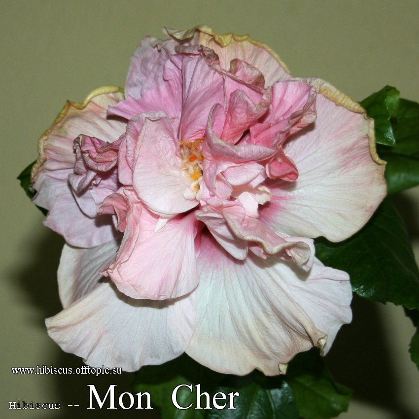 146 - Mon Cher