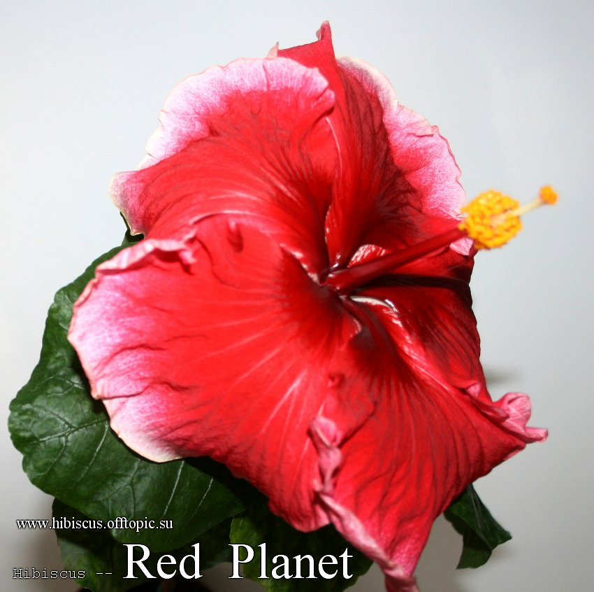 148 - Red Planet