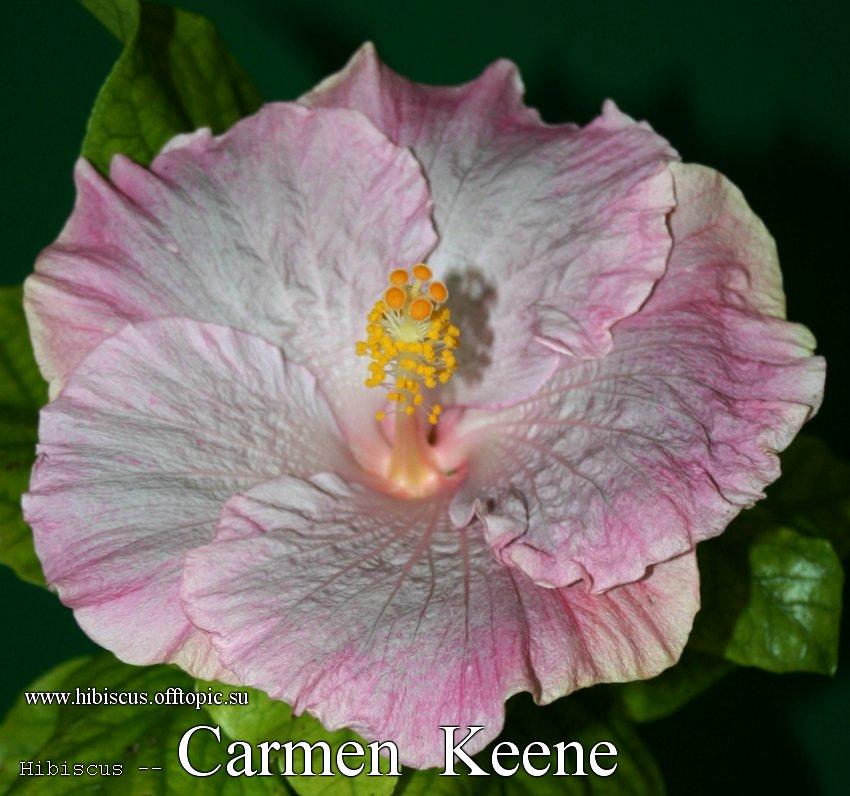 150 - Carmen Keene