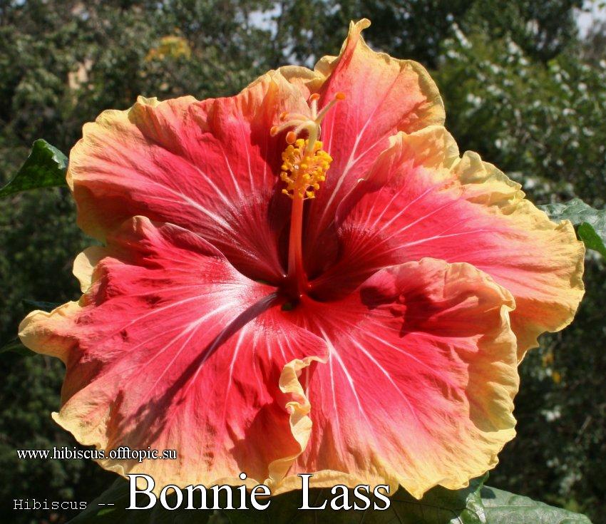 153 - Bonnie Lass