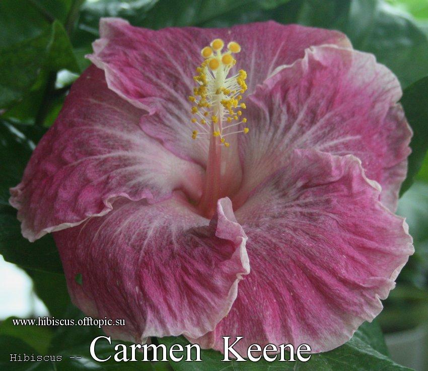 156 - Carmen Keene