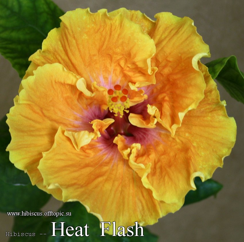 162 - Heat Flash