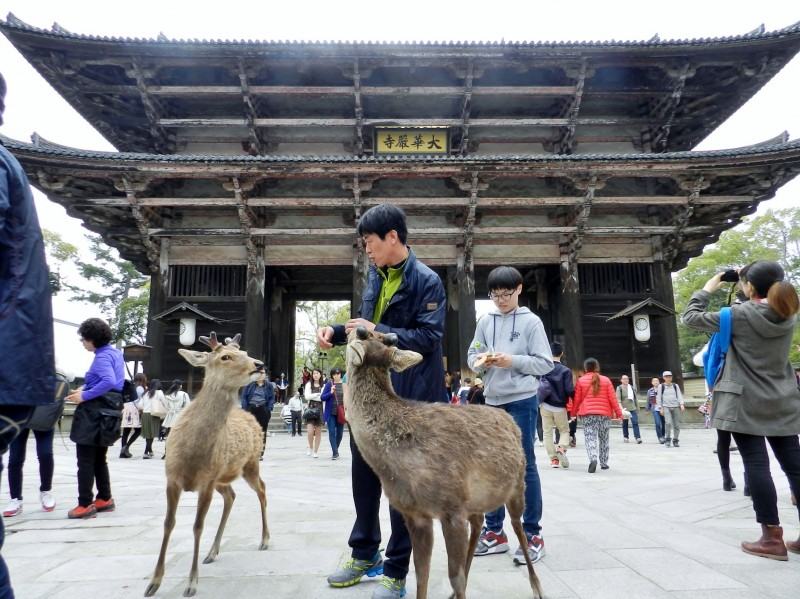 Нара, Япония -