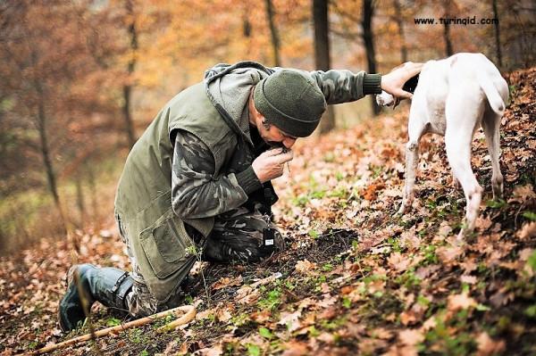 охота на трюфели.jpg