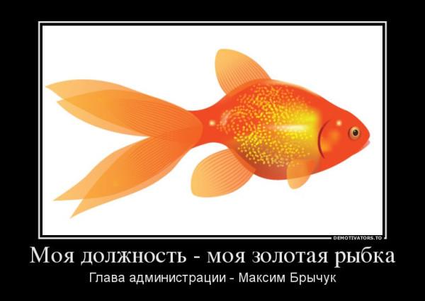 663966_moya-dolzhnost-moya-zolotaya-ryibka_demotivators_ru