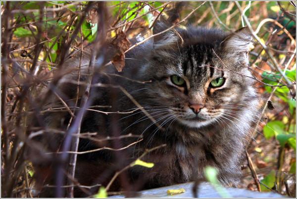 cat_4.jpg