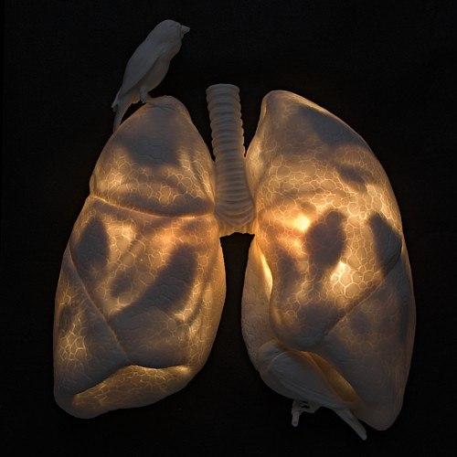 lungs&birds