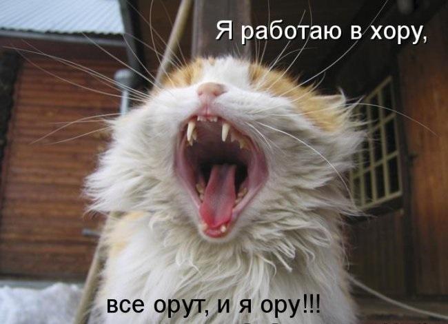 Картинки анекдоты коты