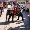 Elephant at Amer