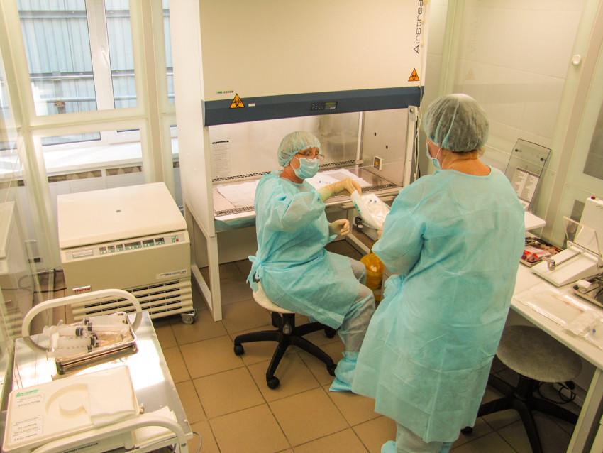 Как трансплантируют стволовые клетки