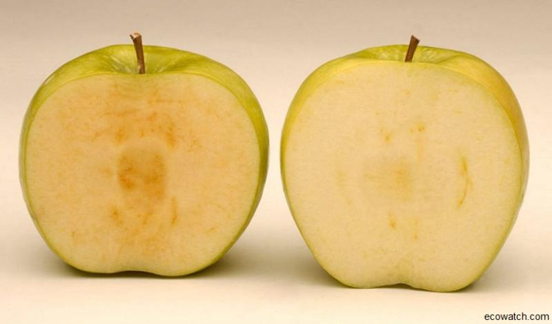 ГМО.jpg