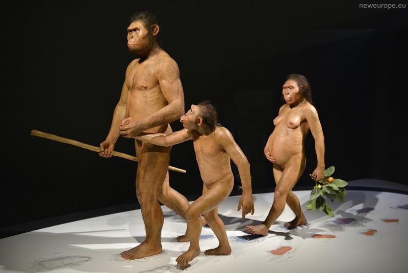 предки человека.jpg