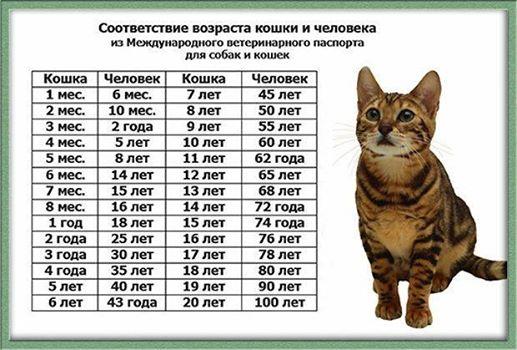 Моей кошке-35 лет!!!))): glasmira