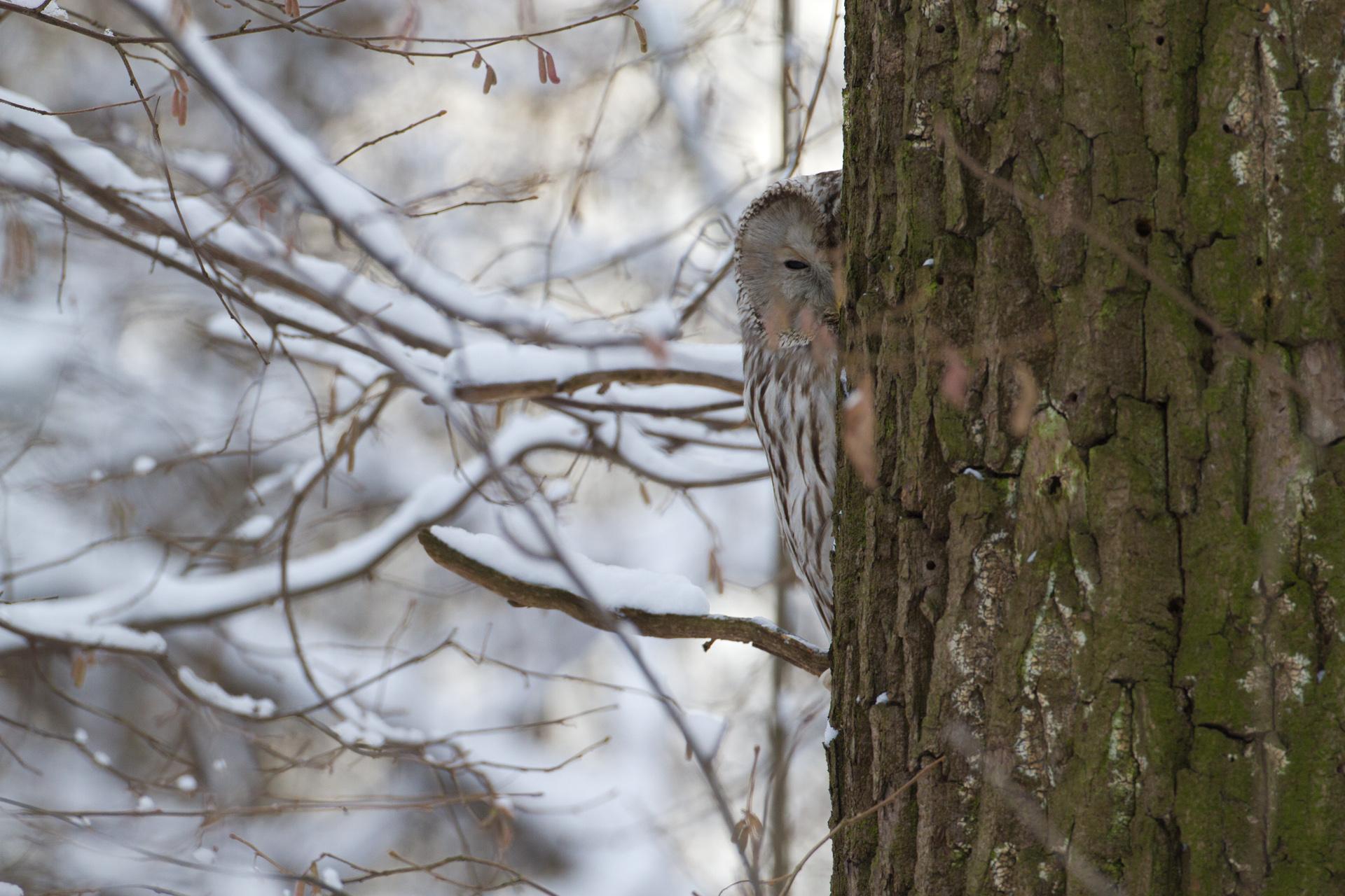 Птицы_Спряталась