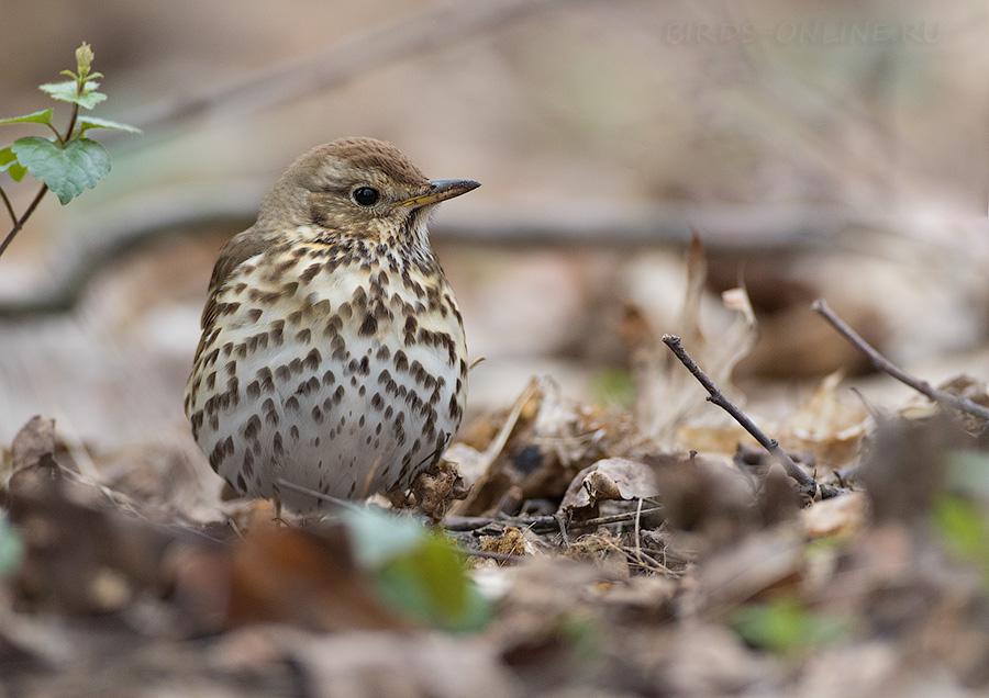 Птицы измайловского парка фото с названиями просто покажу