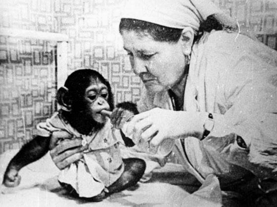 обезьян