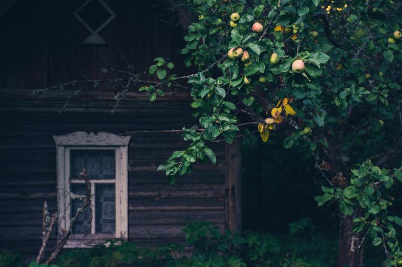 Яблоки деревенские люблю. Особенно способ поедания — срываешь с ветки или подбираешь опадыш, вытираешь об себя, откусываешь три-четыре раза и выбрасываешь в кусты. Если попалось кислое — шумно выплевываешь