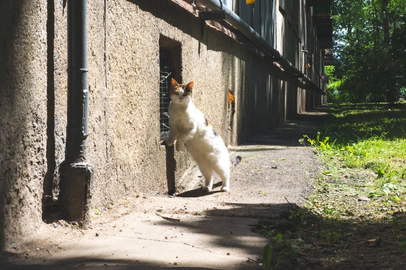 Любопытный котик во дворе на Казанской