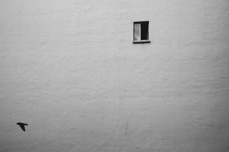 Одинокие птица и окно в Транспортном переулке