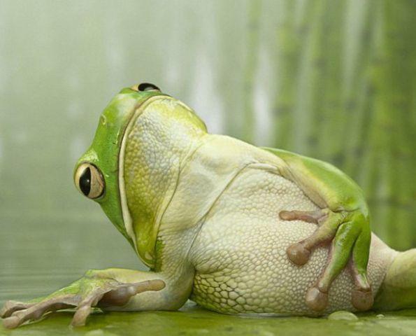 лягушка-с-пузом